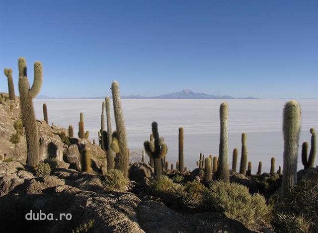 i-la Incahuasi, in mijlocul Salar-ului de Uyuni