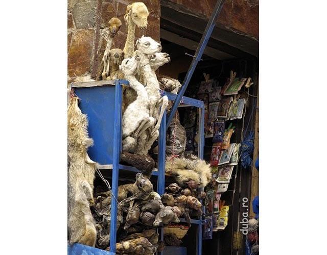pui de lama - ofrande pentru Pachamama (Mama Lume sau Mama Pamant)
