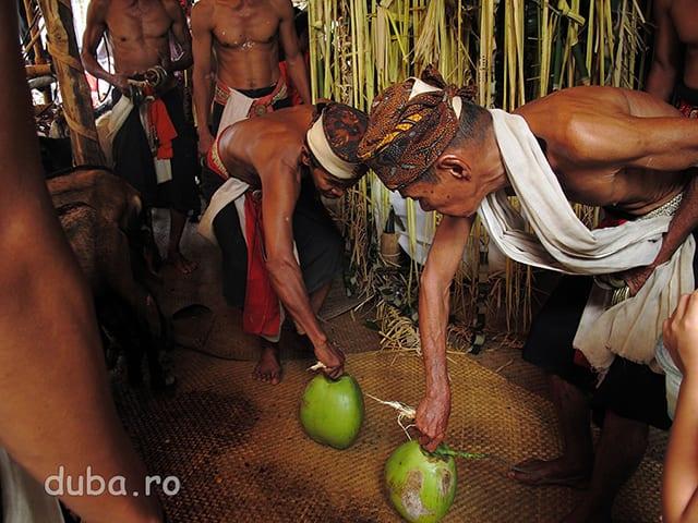In casa de ceremonii Aruh continua. Samanii invart doua nuci de cocos pentru a prevedea daca soarta clanului va fi buna sau nu. Viata e asemeni apei din nuca de cocos si batranii comunitatii pot citi miscarile apei de cocos.