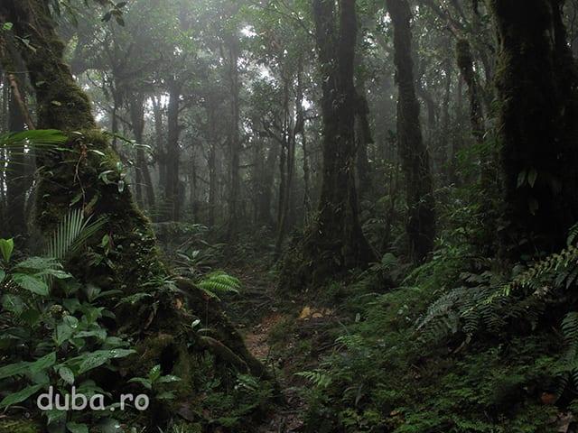 In drum spre creasta M-tilor Meratus. Clima de aici este foarte umeda si la altitudine unde e mai racoare se formeaza paduri cu muschi (mosse forests).