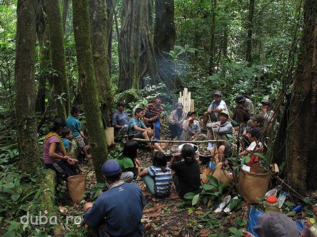 La jumatatea distantei dintre Kyu si Juhu are loc un Aruh Pohon Besar (Ceremonie pentru Pomul Mare). Zeci de dayaci din Kyu si Juhu si-au facut tabara in padure, unde stau timp de 4 zile pentru a le multumi spiritelor ce vegheaza padurea si a le cere bunastare in continuare. Cu ei au venit si copii si am vazut si 2 sugari. Timp de 3 zile toti mananca din vanat, pescuit si orezul ce si l-au adus de acasa.