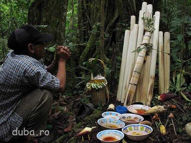 Aruh Pohon Besar are loc la baza celui mai mare copac dintre Kyu si Juhu, adica la vreo 5 ore de mers din Kyu si 3 ore din Juhu. Samanii vorbesc si le aduc ofrande.spiritelor padurii care locuiesc in acest copac