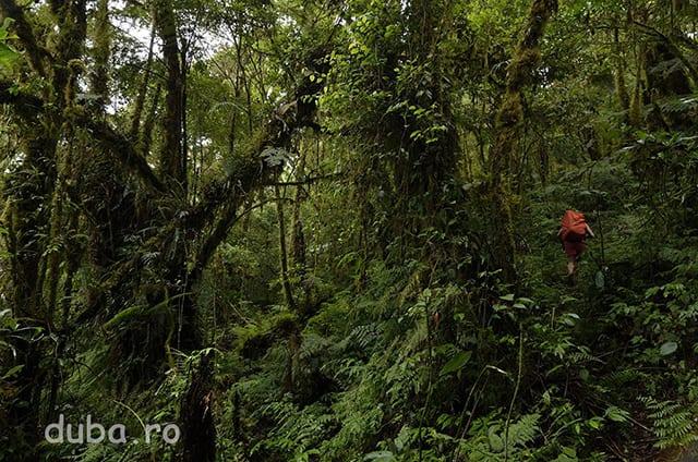 Timp de doua zile si jumatate mergem prin padurea virgina si extrem de deasa din Seram. Terenul foarte accidentat de pe versantul Sudic o apara de companiile forestiere, si nu sunt nici asezari umane pe partea asta.