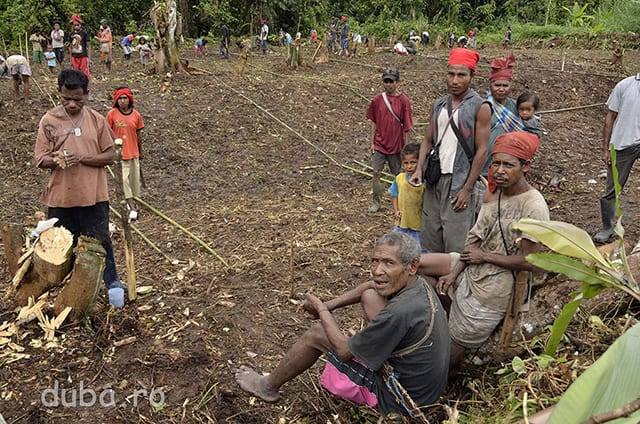 Un grup de oameni din Manusela, mai exact majoritatea capilor de familie, se pregatesc sa cultive orez. La pecarea din Manusela suntem martorii unui moment istoric in viata comunitatii. Este pentru prima data cand un sat din zona asta incepe sa faca agricultura in mod organizat. Locuitorii din Manusela si Maraina (un catun invecinat) au primit seminte de orez de la administratia locala a districtului. Pana in prezent mancarea lor de baza este faina ce se obtine din trunchiul palmierului de sago care creste salbatic completata diverse tipuri de cartofi si banane, si vanatul.