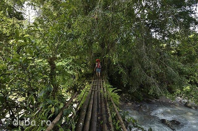 Podul din bambus din Kenike. Dupa doar o zi aici ne luam din nou rucsacii in spate. Mai sunt 3 zile pana la soseaua din Nordul Seramului, proviziile noastre sunt pe terminate (majoritatea le daduse la schimb gazdelor de prin sate) si timpul destul de limitatat. (Toti aveam de rezolvat cate ceva in Ambon in zilele urmatoare.) Chiar cand am trecut prin Kenike, majoritatea barbatilor erau plecati din sat. Carau de jos, de la sosea, sute de saci de ciment. Guvernul local finanta construirea unui pod din beton in locul celui din bambus. Un pod din beton in mijlocul junglei, la 3 zile distanta de orice acces auto! O alta gaselnita pentru a fenta bani de la buget si pentru a face propaganda despre implicarea guvernului in dezvoltarea comunitatilor izolate. Indonezia 100%.