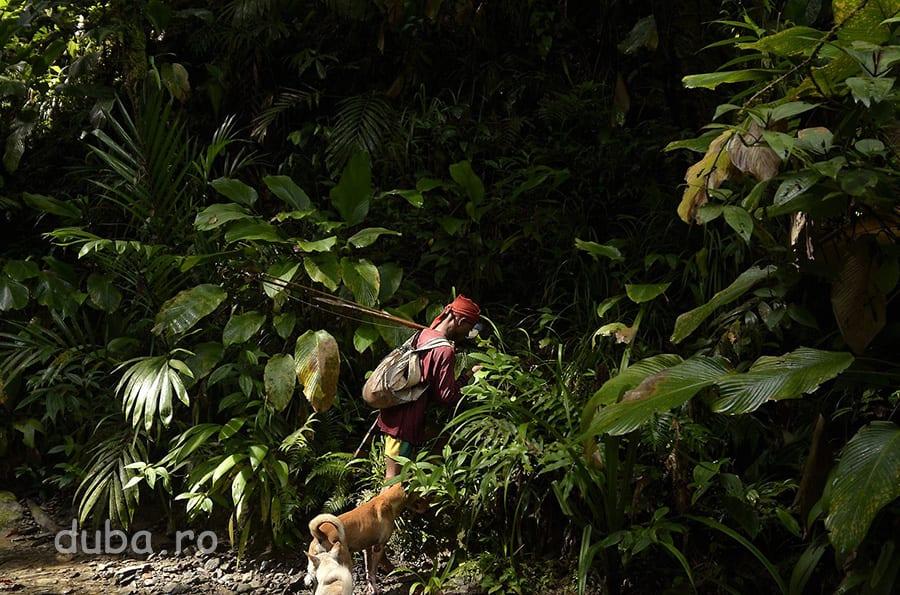 Buang si cainii lui intra in padurea de langa Huaulu. In astfel de zone trebuie sa fiu mereu aproape de el, ca sa nu pierd poteca ascunsa in padurea extrem de deasa.
