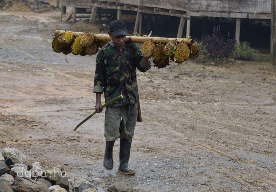 Bapak guru se intoarce de la padure, plouat si cu o gramada de durian.