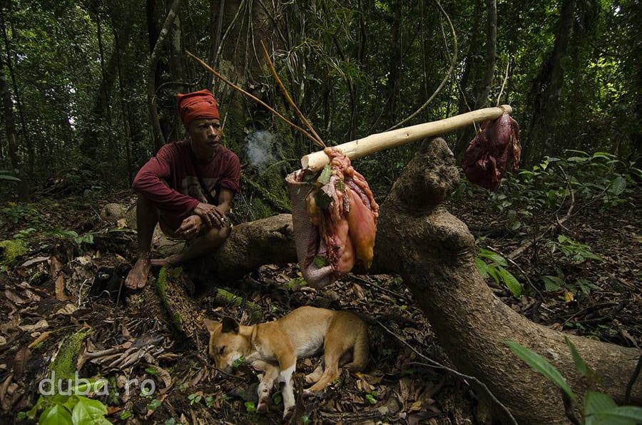 Este jumatatea zilei, Buang a terminat de transat cassowary-ul si ia o pauza de tigara. Cu burtile pline, cainii iau si ei o pauza de somn. Carnea buna este pusa pe un par, pentru transportat.