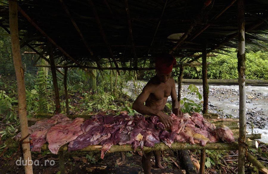 La tabara, Buang aseaza carnea cassowary-ului in afumatorie.