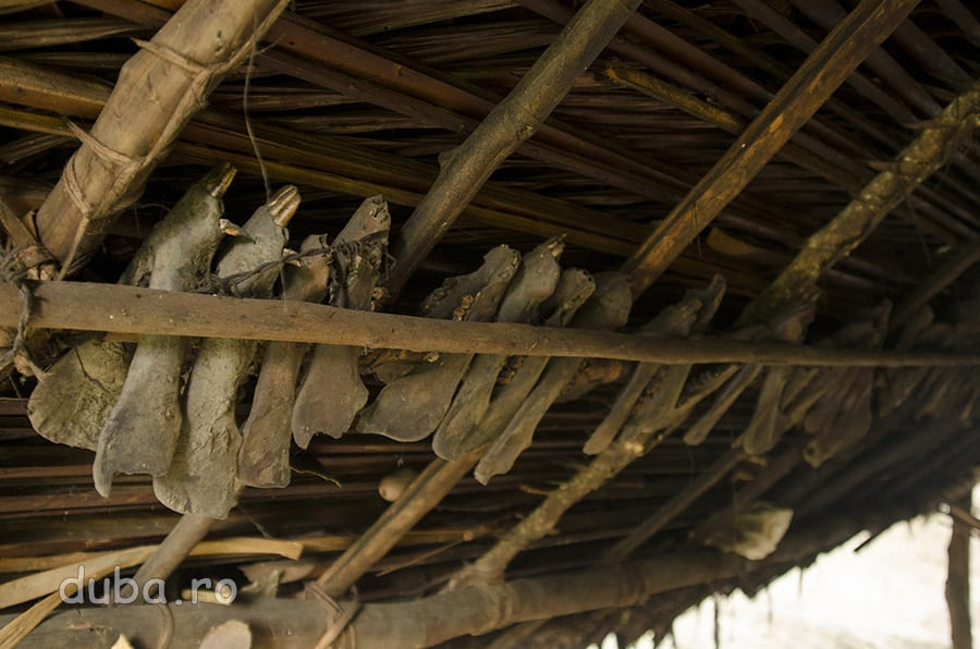 Colectia de mandibule a lui Buang. Vanatorul naulu pastreaza pentru el doar mandibulele animalelor vanate, ca dovada ca el este un vanator bun. Carnea o da familiei lui si vecinilor.