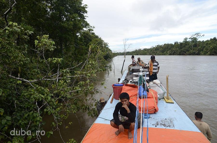 La iesirea dintre copaci, pe barca cu care am plecat din Agats spre Senggo.