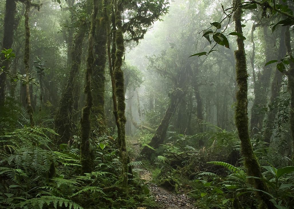 BORNEO – Pădurile cu stafii ale dayakilor