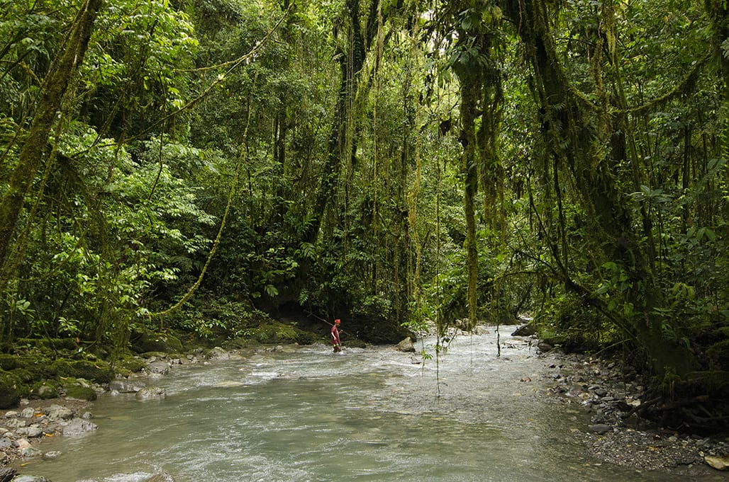 MALUKU – În pădurea lui Kaitahu Upuan