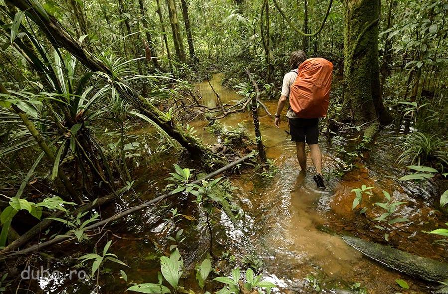 Leorpăind prin pădurea korowailor. Contrar așteptărilor, mersul prin apă era cel mai confortabil. Unde nu era apă, era noroi! Mersul prin noroaie ne-a stors, fizic și psihic și ne-am umplut de bube și mâncărimi la picioare.