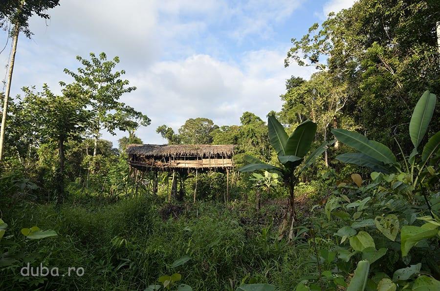 În jurul casei, korowaii își fac grădină, în care au bananieri, cartofi dulci, breadfruit și sub casă, la umbră și la îndemână, frunze de tutun. Uneori au și câțiva porci, care mișună liberi pe acolo.