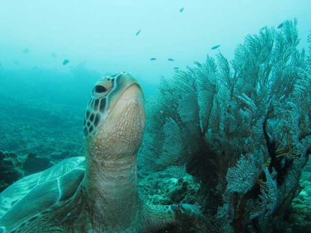 scuba-lombok008