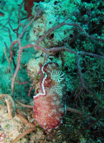 scuba-lombok009