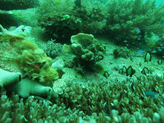 scuba-lombok012