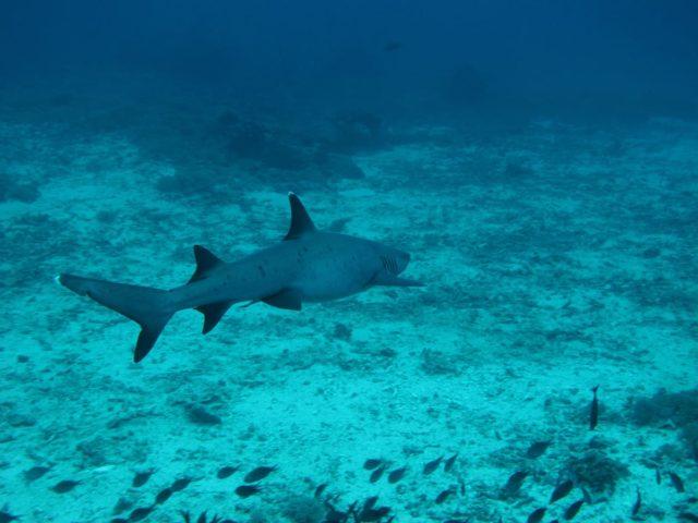 scuba-lombok013