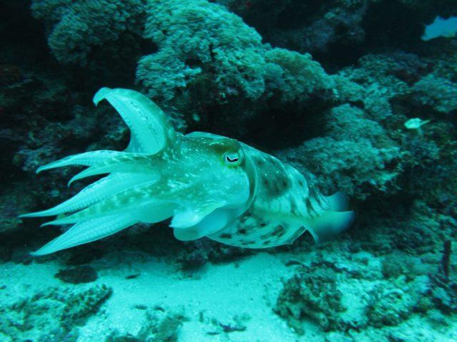 scuba-lombok014