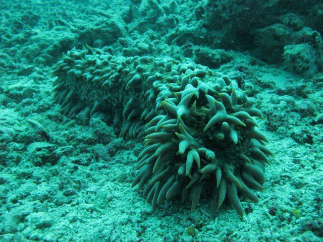 scuba-lombok016