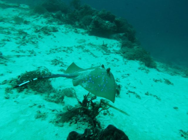 scuba-lombok019