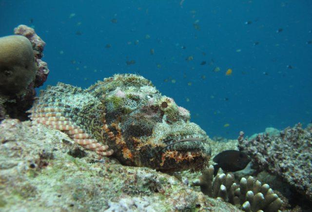 scuba-lombok020