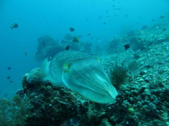 scuba-lombok021