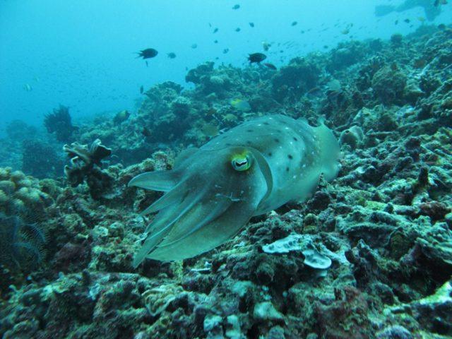 scuba-lombok022