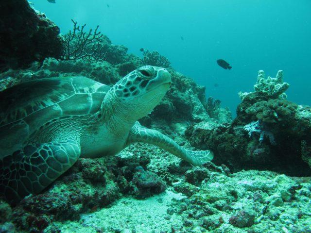 scuba-lombok023