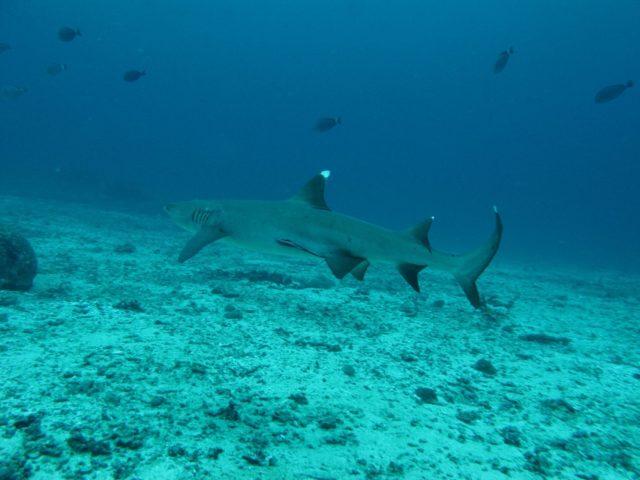 scuba-lombok027