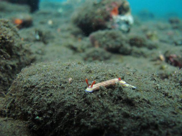 scuba-lombok035