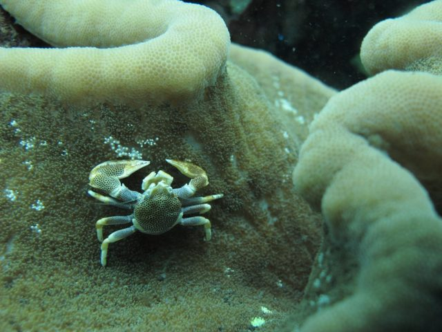 scuba-lombok036