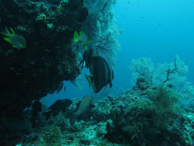 scuba-lombok037