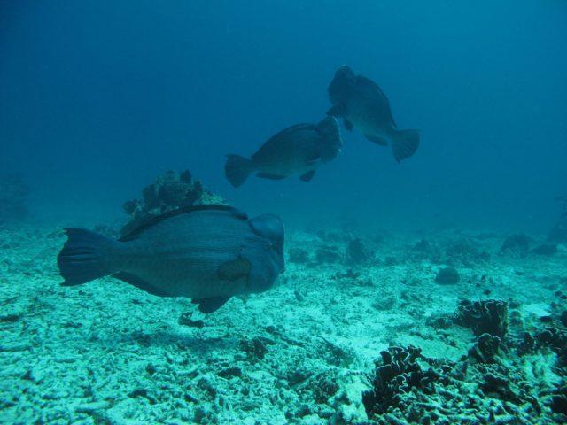 scuba-lombok042