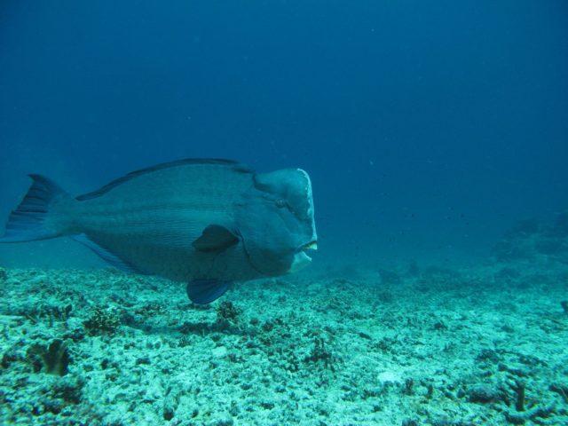 scuba-lombok043