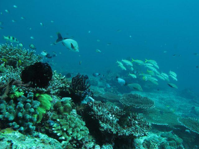 scuba-lombok044
