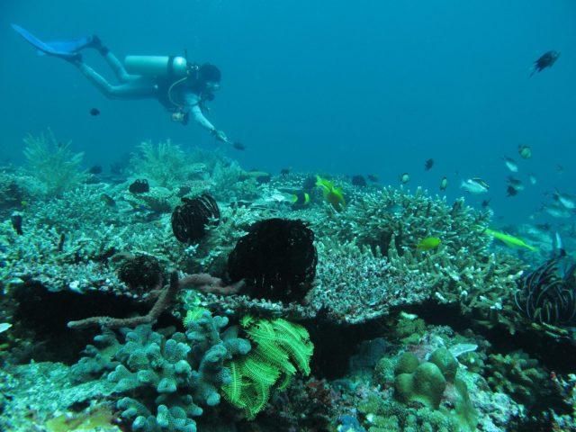 scuba-lombok045