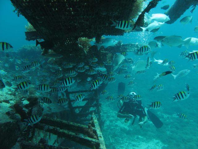 scuba-lombok046