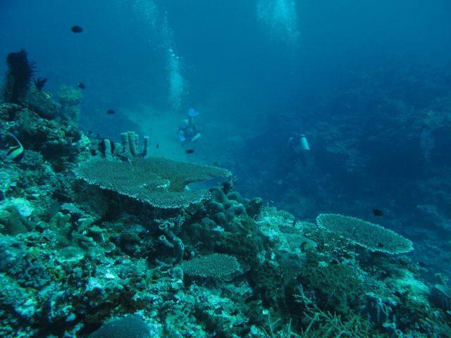 scuba-lombok047