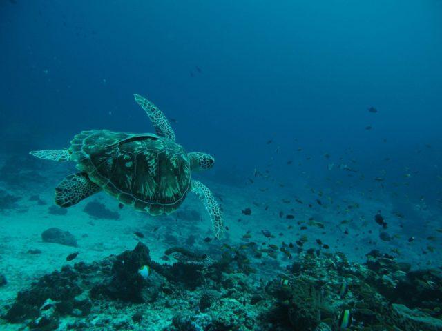 scuba-lombok048