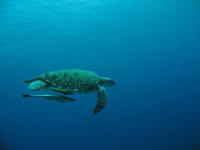 scuba-lombok049