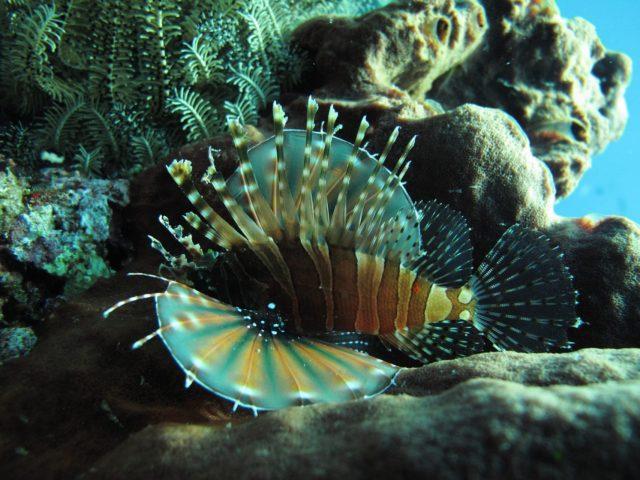 scuba-lombok050