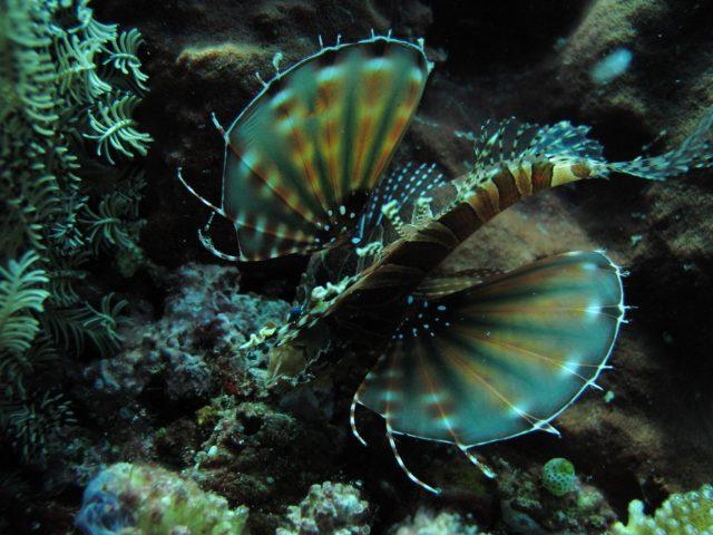 scuba-lombok051
