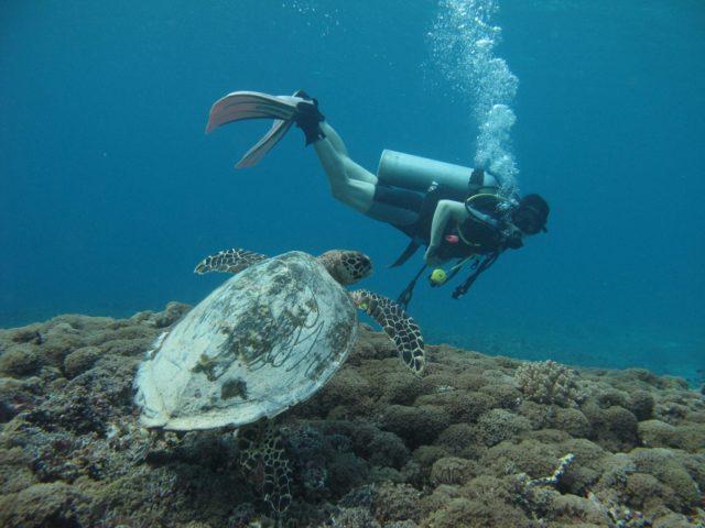 scuba-lombok055