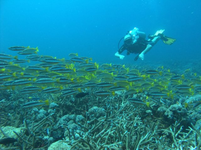 scuba-lombok056